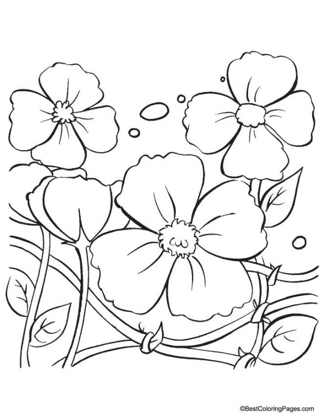 Coloriage et dessins gratuits Plante Coquelicot fleurie à imprimer