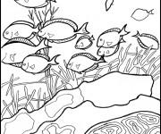 Coloriage dessin  Corail 11