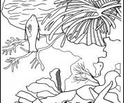 Coloriage dessin  Corail 19