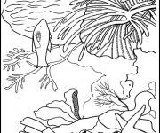 Coloriage Corail Plante marine