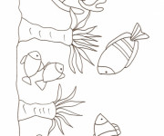 Coloriage Corail simple
