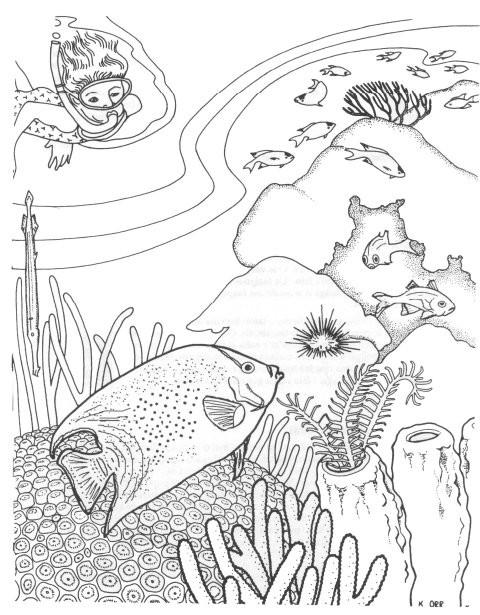 Coloriage et dessins gratuits Le plongeur et les Coraux à imprimer