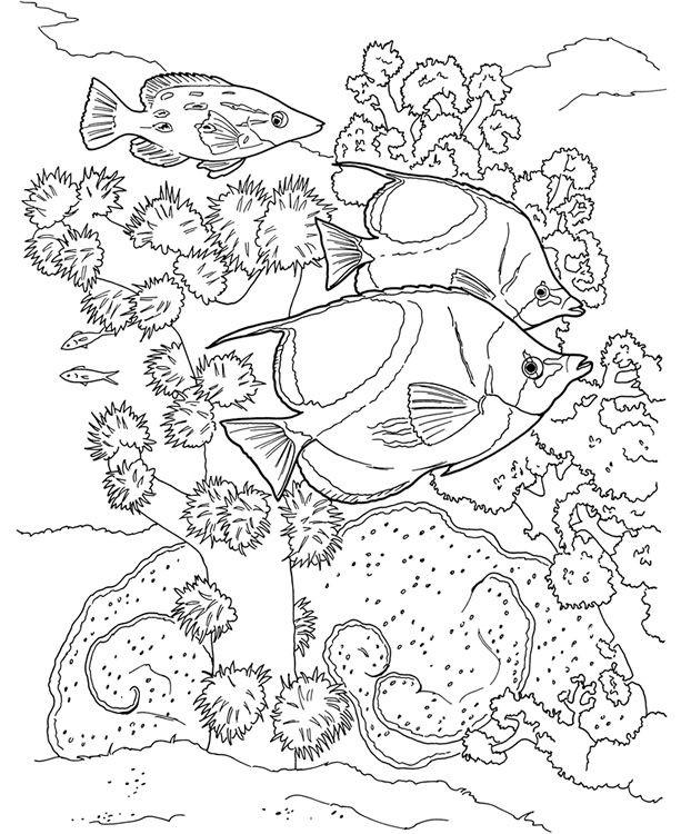 Coloriage et dessins gratuits Poissons exotiques nageant par le Corail à imprimer