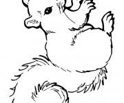 Coloriage Ecureuil 1
