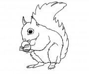 Coloriage et dessins gratuit Ecureuil 11 à imprimer