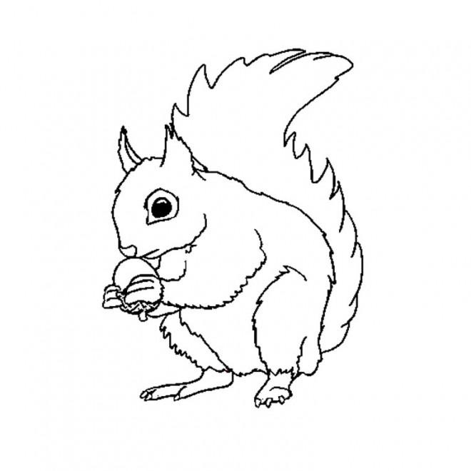 Coloriage et dessins gratuits Ecureuil 11 à imprimer