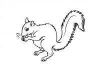 Coloriage et dessins gratuit Ecureuil 12 à imprimer