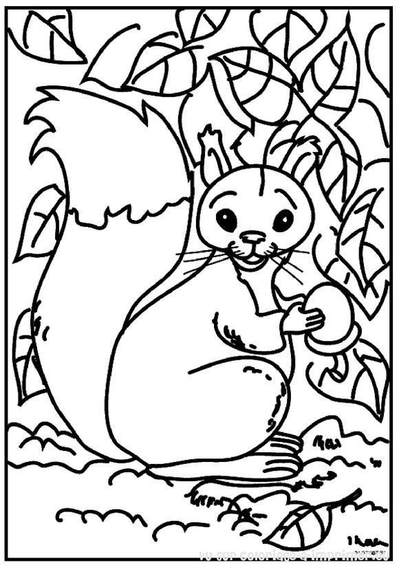 Coloriage et dessins gratuits Ecureuil 13 à imprimer