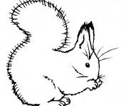 Coloriage et dessins gratuit Ecureuil 16 à imprimer