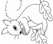 Coloriage et dessins gratuit Ecureuil 19 à imprimer