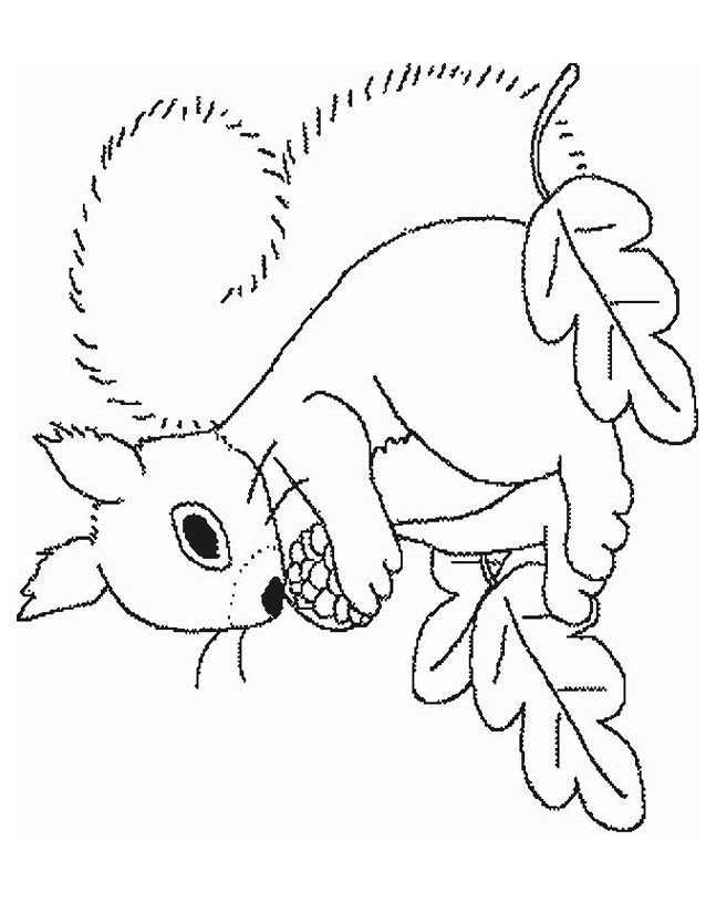 Coloriage et dessins gratuits Ecureuil 19 à imprimer