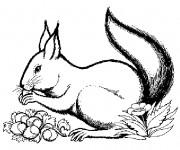 Coloriage et dessins gratuit Ecureuil 20 à imprimer