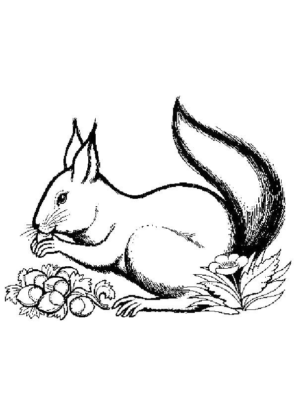 Coloriage et dessins gratuits Ecureuil 20 à imprimer