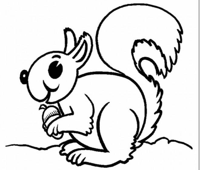 Coloriage et dessins gratuits Ecureuil 23 à imprimer