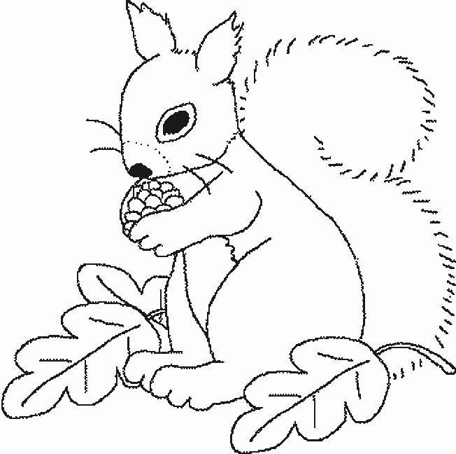 Coloriage et dessins gratuits Ecureuil 27 à imprimer
