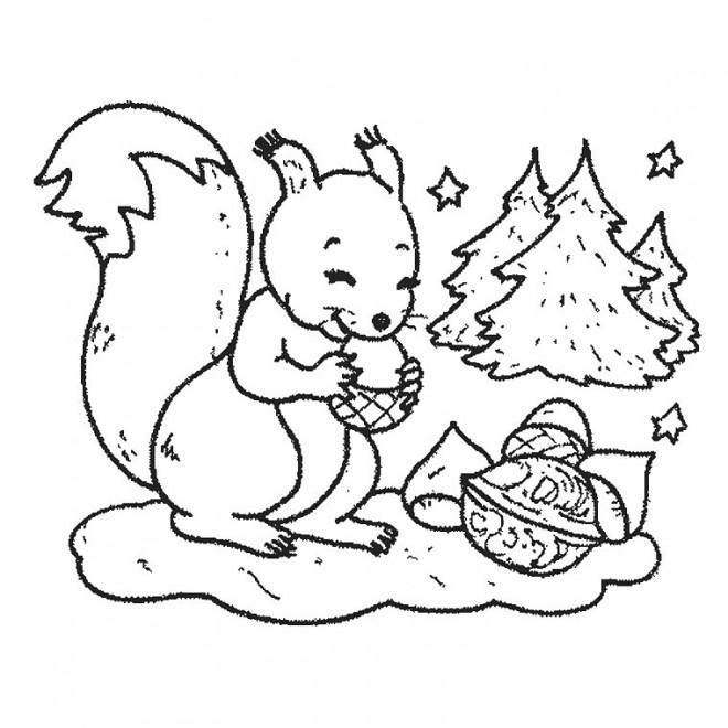 Coloriage et dessins gratuits Ecureuil 3 à imprimer