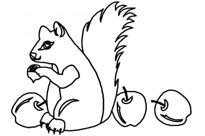 Coloriage et dessins gratuits Ecureuil 32 à imprimer