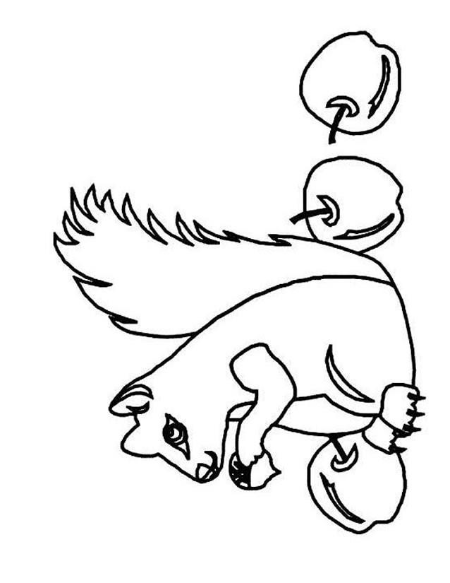 Coloriage et dessins gratuits Ecureuil 33 à imprimer