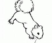 Coloriage et dessins gratuit Ecureuil 35 à imprimer