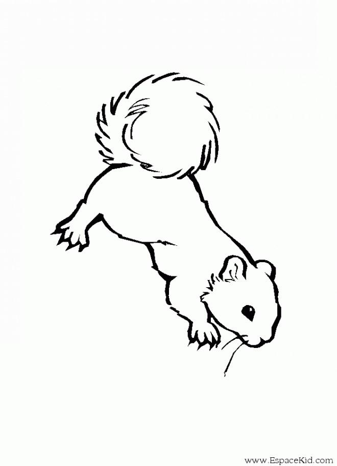 Coloriage et dessins gratuits Ecureuil 35 à imprimer