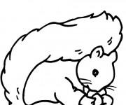 Coloriage et dessins gratuit Ecureuil 37 à imprimer
