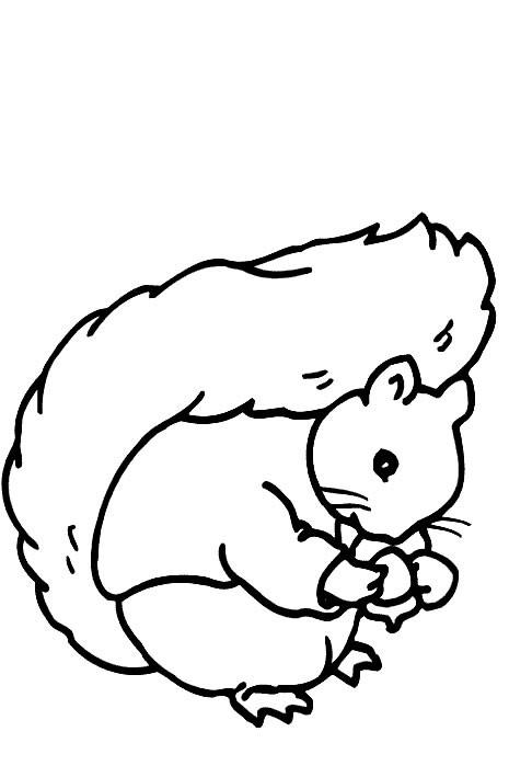 Coloriage et dessins gratuits Ecureuil 37 à imprimer