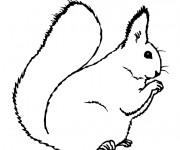 Coloriage et dessins gratuit Ecureuil 40 à imprimer