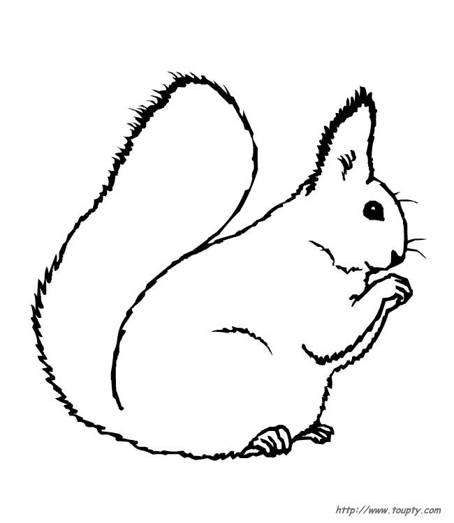 Coloriage et dessins gratuits Ecureuil 40 à imprimer