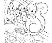 Coloriage et dessins gratuit Ecureuil 41 à imprimer