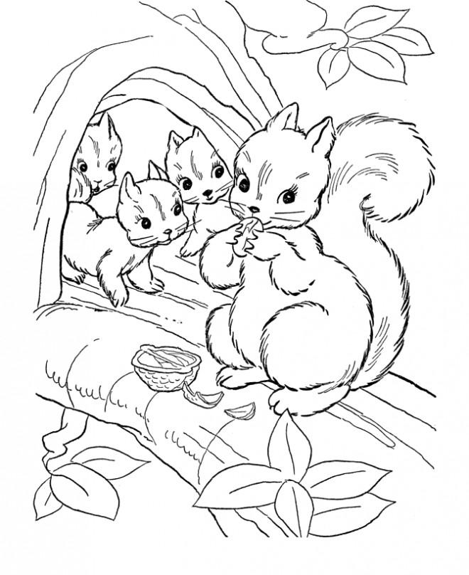 Coloriage et dessins gratuits Ecureuil 41 à imprimer