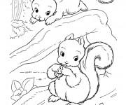 Coloriage et dessins gratuit Ecureuil 45 à imprimer
