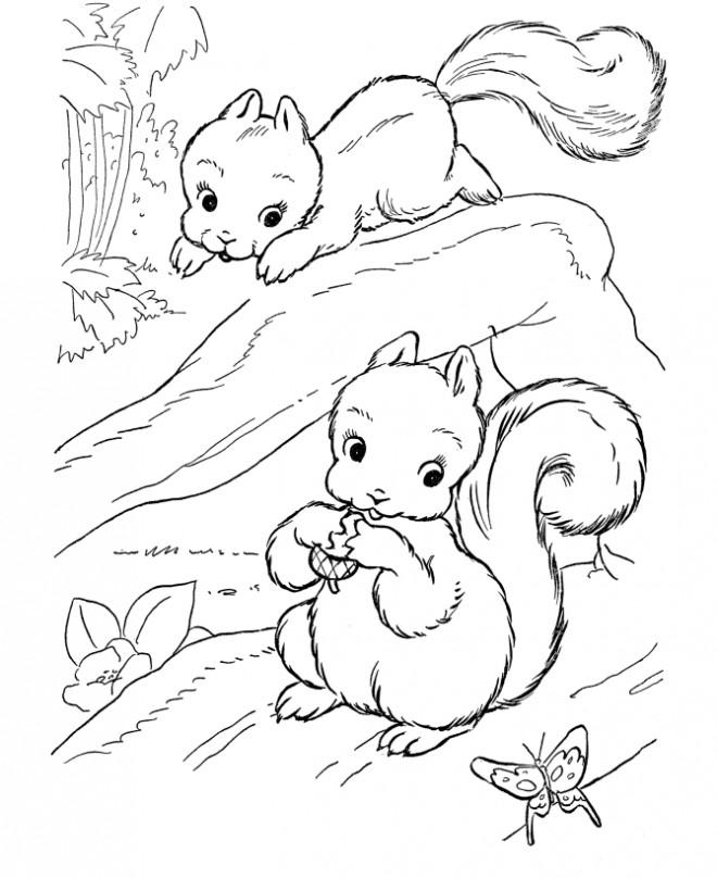 Coloriage et dessins gratuits Ecureuil 45 à imprimer