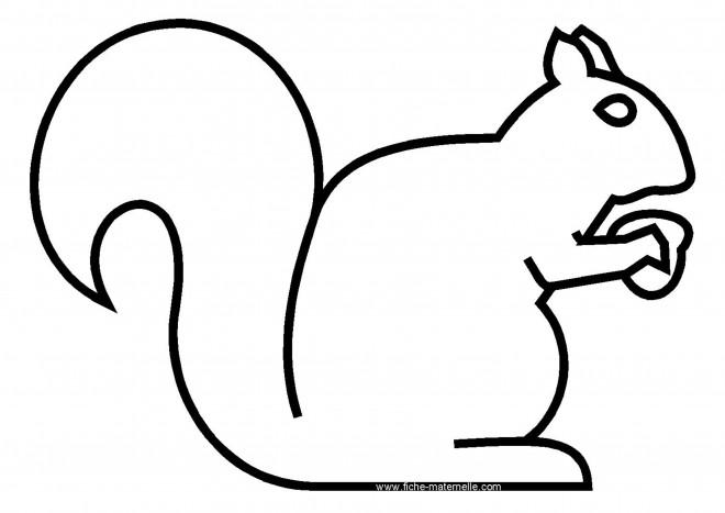 Coloriage et dessins gratuits Ecureuil 46 à imprimer