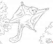 Coloriage et dessins gratuit Ecureuil 49 à imprimer