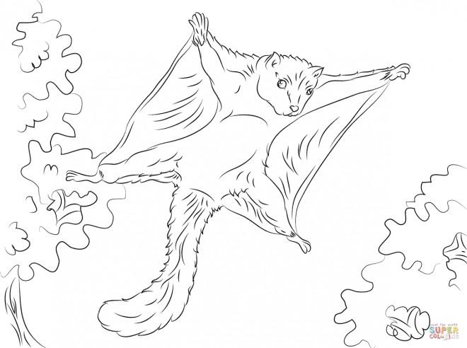 Coloriage et dessins gratuits Ecureuil 49 à imprimer