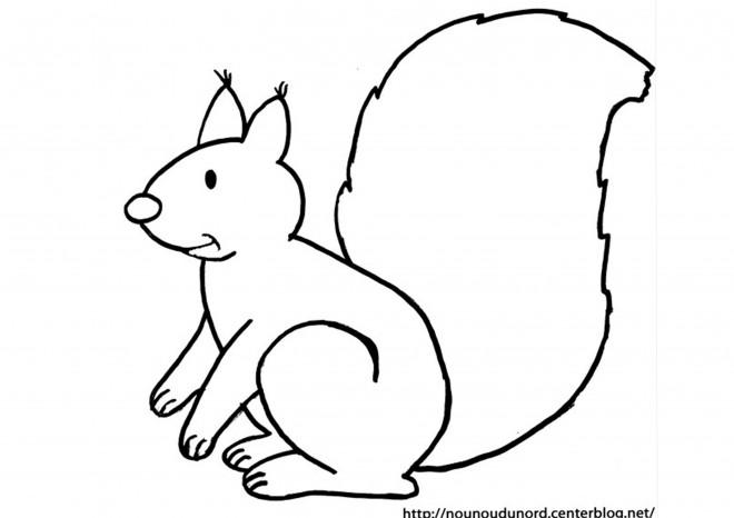 Coloriage et dessins gratuits Ecureuil 5 à imprimer