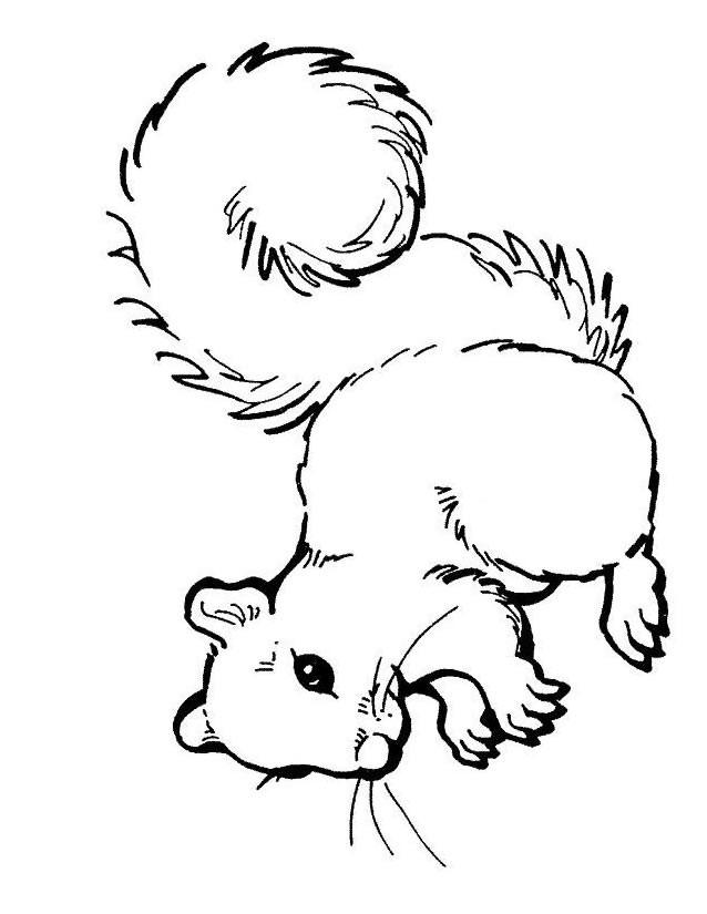 Coloriage et dessins gratuits Ecureuil 52 à imprimer
