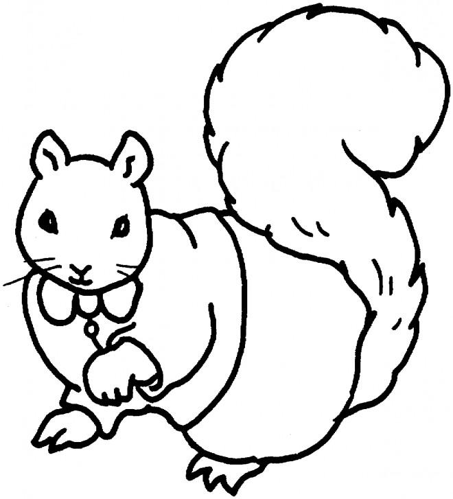 Coloriage et dessins gratuits Ecureuil 54 à imprimer