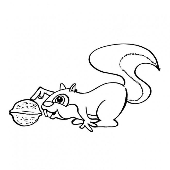 Coloriage et dessins gratuits Ecureuil 55 à imprimer