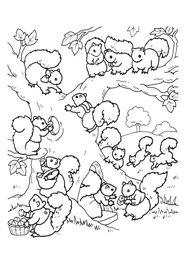 Coloriage et dessins gratuits Ecureuil 56 à imprimer