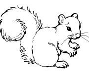 Coloriage et dessins gratuit Ecureuil 6 à imprimer