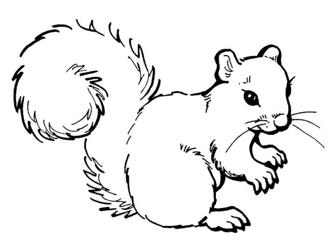 Coloriage et dessins gratuits Ecureuil 6 à imprimer