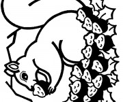 Coloriage et dessins gratuit Ecureuil 61 à imprimer
