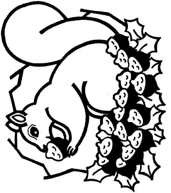 Coloriage et dessins gratuits Ecureuil 61 à imprimer