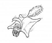Coloriage et dessins gratuit Ecureuil 62 à imprimer