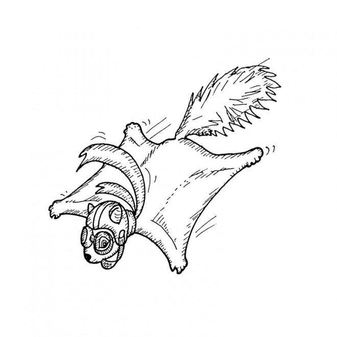 Coloriage et dessins gratuits Ecureuil 62 à imprimer