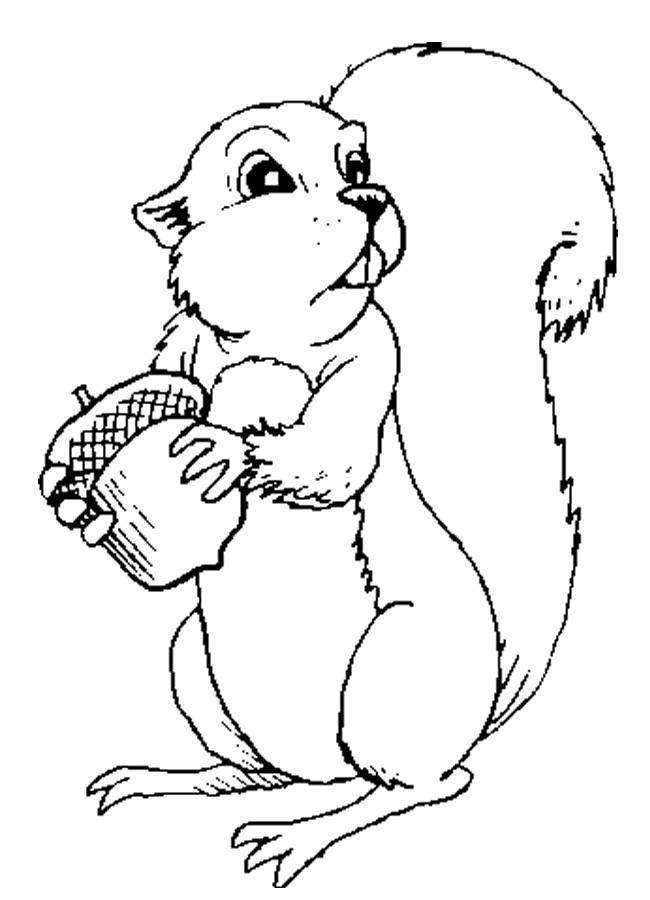 Coloriage et dessins gratuits Ecureuil 66 à imprimer