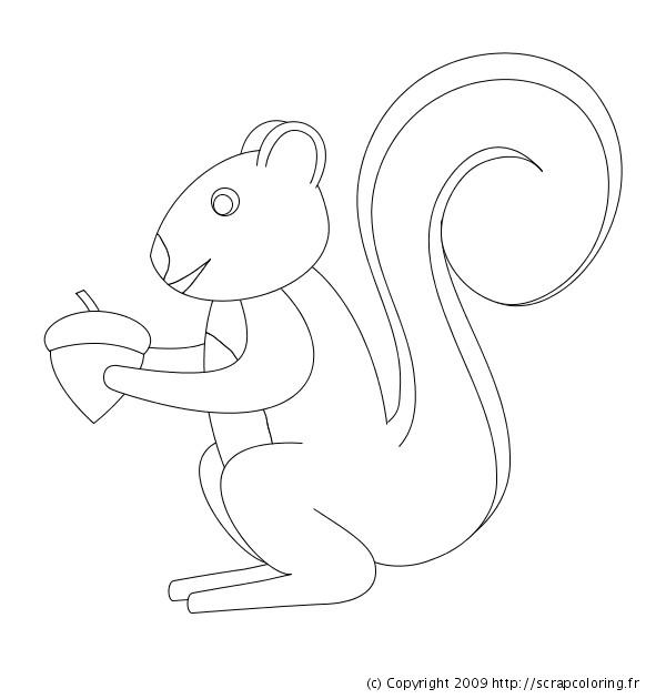 Coloriage et dessins gratuits Ecureuil 67 à imprimer