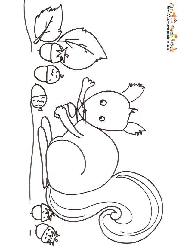 Coloriage et dessins gratuits Ecureuil 68 à imprimer
