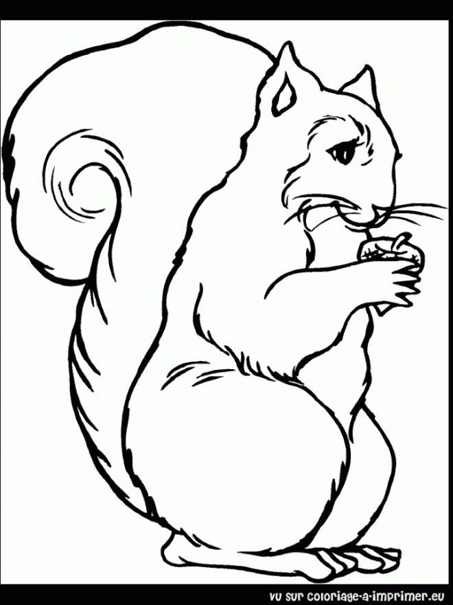 Coloriage et dessins gratuits Ecureuil 69 à imprimer